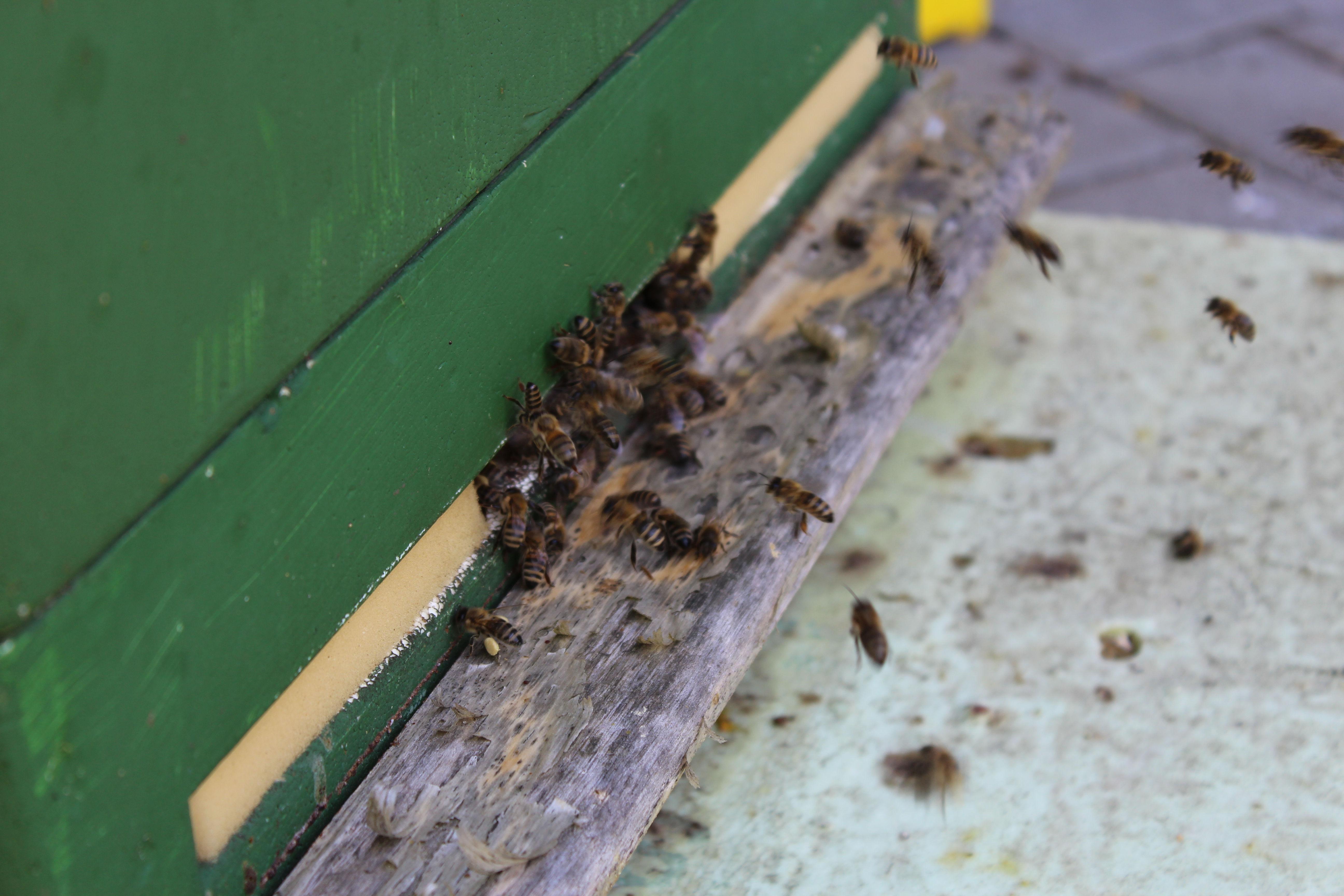 Wildbienen - Provision für Bienen - Aktion Rebecca Kiehne Makler Halle (Saale) und Saalekreis, Leipzig Marktwertermittlungsgutschein